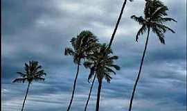 Itamaracá - Itamaracá-PE-Coqueiros na praia-Foto:patano