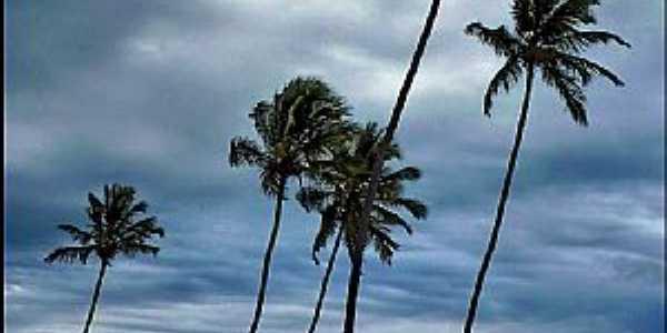 Itamaracá-PE-Coqueiros na praia-Foto:patano
