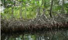 Itapissuma - Mangue do Canal de Sta Cruz, Por Marcos Mousinho