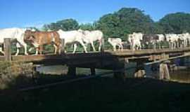 Cocos - Gado atravessando a ponte sobre o Rio Itaguari em Cocos-BA-Foto:R�mulo Henok