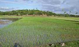 Lagoa Grande - Plantação de arroz por:Leandro Chaves