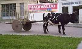 Negras - Carro de Boi no centro de Negras-PE-Foto:MMAlencar