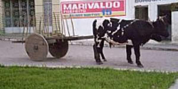 Carro de Boi no centro de Negras-PE-Foto:MMAlencar
