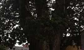 Nossa Senhora do Ó - Baobá 350 anos-Foto:turquito