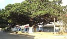 Santa Cruz do Capibaribe - Essas são as centenárias GAMELEIRAS , Por Lucinalva Gomes da silva