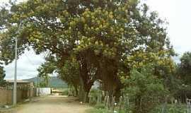 Cordeiros - Cordeiros-BA-Linda árvore na rua do distrito-Foto:Jeffson Almeida
