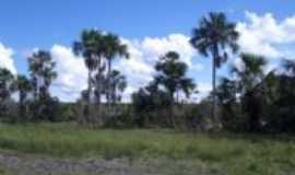 Coribe - Coribe-BA-Vegetação da região-Foto:elinelson queiroz