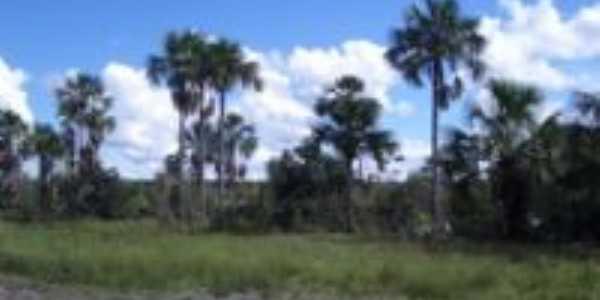 Coribe-BA-Vegetação da região-Foto:elinelson queiroz