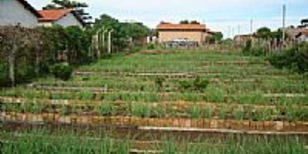 Horta Comunitária-Foto:EntreRios