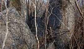 Bom Princ�pio do Piau� - Natureza-Foto:Helder Fontenele