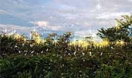 Campo Maior - Campo Maior-PI-Berçário das Garças às margens do Açude-Foto:walterfmota