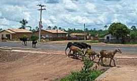 Caxingó - Animais nas ruas de Caxingó-Foto:Blog do Gil