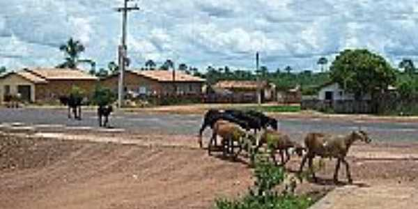 Animais nas ruas de Caxingó-Foto:Blog do Gil