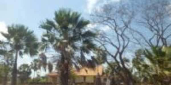 Carnaubais em frente a casa grande na comunidade canto do igarapé, Por Francisco Alcy
