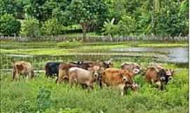 Itaueira - Área rural-Foto:Agamenon Pedrosa