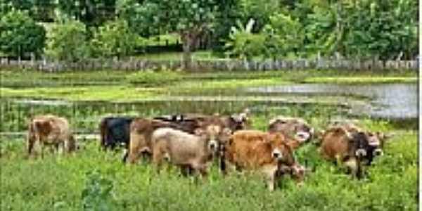Área rural-Foto:Agamenon Pedrosa