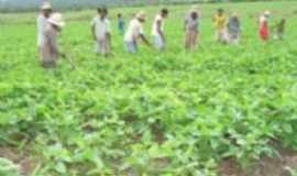 Lagoinha do Piauí - Agricultura, Por macedo filho