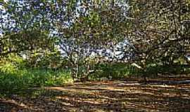 Murici dos Portelas - Cajueiro-Foto:Helder Fontenele
