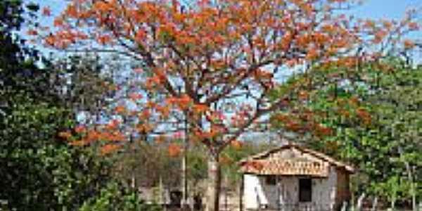 Zona rural em Olho D´Água do Piauí-PI-Foto:Edilson Morais Brito…