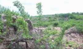 Patos do Piauí - paisagem de patos , Por joao saraiva