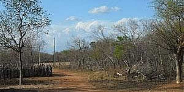 São Francisco de Assis do Piauí-PI-Caatinga-Foto:www.portalaz.com.br