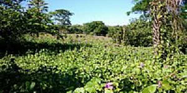 Tapete de flores em São João da Serra-Foto:davidjales