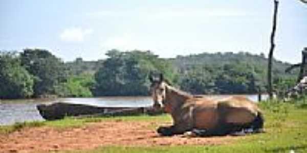 Bela imagem do cavalo e o Rio Parnaíba em Uruçuí-PI-Foto:guilhermefloriani