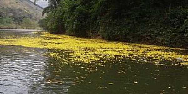 Rio Ribeira em Primavera em Adrianópolis - PR