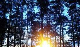 Alto Alegre - Sol entre árvores-Foto:Márcio Greyck