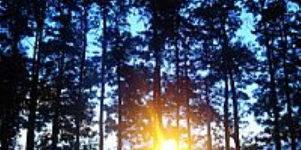 Sol entre árvores-Foto:Márcio Greyck