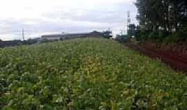 Alto Porã - Plantaçao de soja-Foto:Ivo Boing