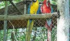 Amaporã - Aves
