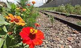 Arapongas - Flores na linha do trem em Arapongas-Foto:Paulo Yuji Takarada