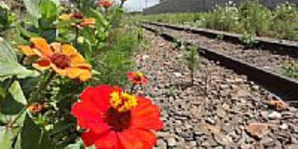 Flores na linha do trem em Arapongas-Foto:Paulo Yuji Takarada