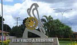 Araruna - Araruna foto por William Fialho