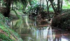 Araucária - Horto Florestal