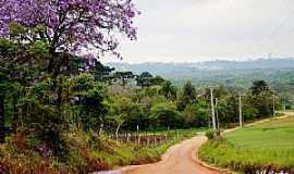 Araucária - Área Rural de Araucária