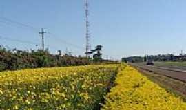 Aricanduva - Flores à beira da Rodovia-Foto:Aroldo Luders