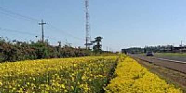 Flores à beira da Rodovia-Foto:Aroldo Luders