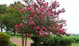 Bourbonia - Jardim em Bourbonia-Foto:tonysilva.a.r.a