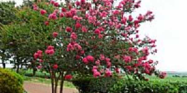 Jardim em Bourbonia-Foto:tonysilva.a.r.a