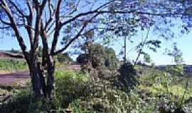 Braganey - Estrada e Vegetação-Foto:Artemio C.Karpinski
