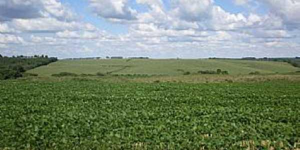 Candoi-PR-Lavoura de plantação de soja-Foto:gentildallo