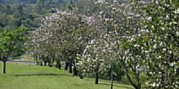 Árvores na beira da estrada de Caramurú-Foto:josé carlos farina