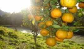 Cerro Azul - fruta tipica da região, Por matilde barbiot