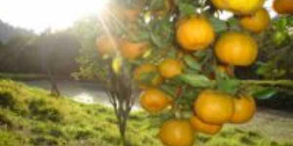 fruta tipica da regi�o, Por matilde barbiot