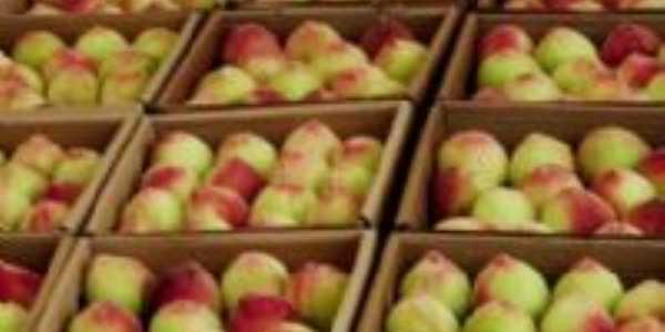 pessegos uma fruta muito vendida e utilizada em cerro azul, Por matilde barbiot