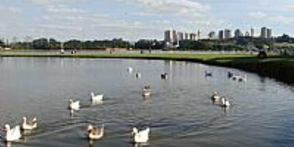 Curitiba-PR-Patos no Lago do Parque Bariguí-Foto:Paulo Yuji Takarada