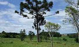 Curiúva - Símbolo do Paraná por lhp1500