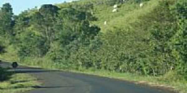Gado e estrada em Doutor Antônio Paranhos-Foto:Emerson Novalski